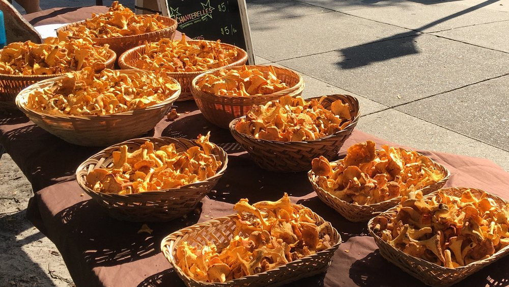 A nice spread of quality Chanterelles at the farmer's market.