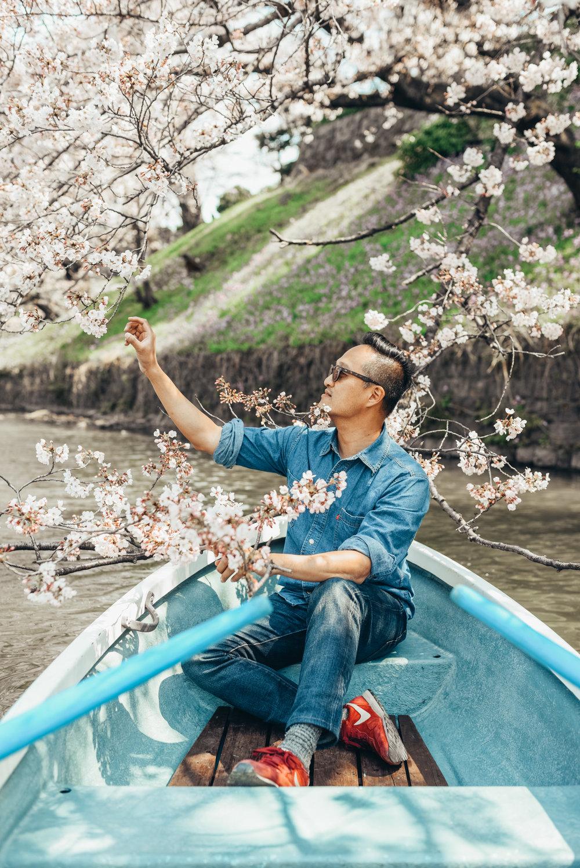 chidorigafuchi cherry blossom zorymory humminglion