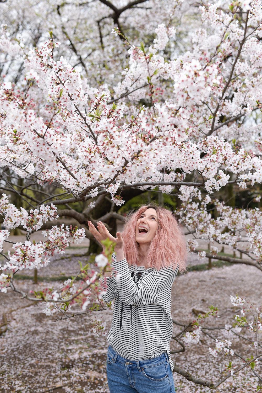 yoyogi park zorymory humminglion cherry blossom