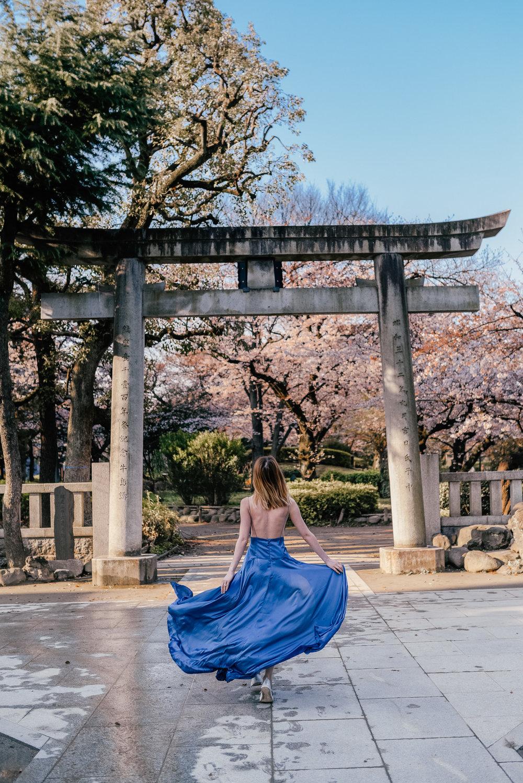 sumida park cherry blossom