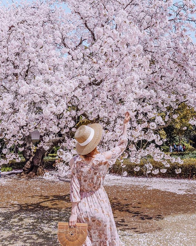 """Today is all about """"winter is coming"""" but if you prefer to hold on to spring / or not Game Of Thrones fan, swipe for more blossoms ✨🌸 #henryzoryinjapan"""