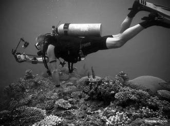 Simon Mallender   Dive PlanIt