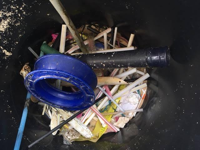 in a bucket.jpg