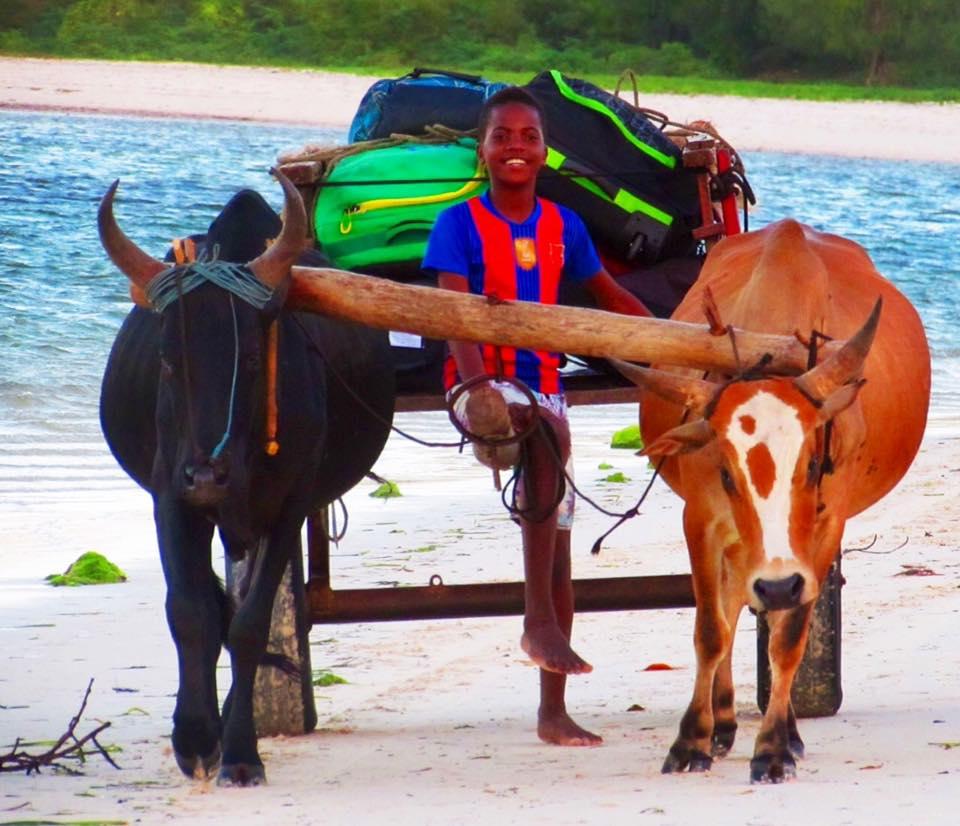 kitesurf madagascar sakalava diego kiteparadise zebu carriage