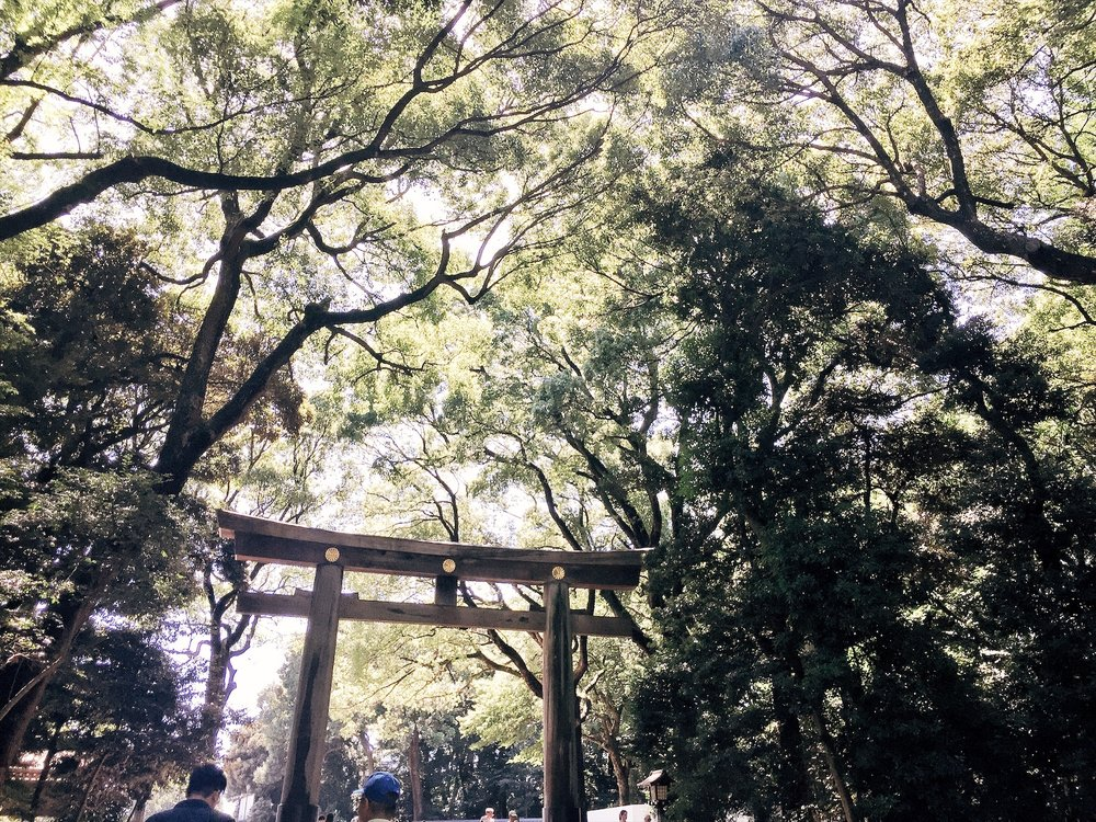 Japan first-timer: Meiji Jingu -  Ruthvcp.com