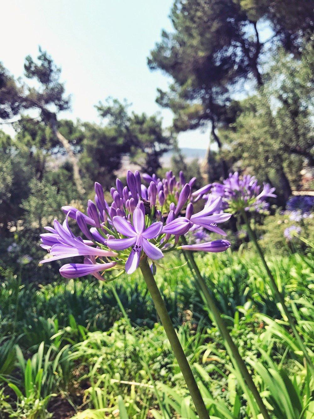 Im Park Güell schmücken viele schöne, bunte Blumen den Wegesrand
