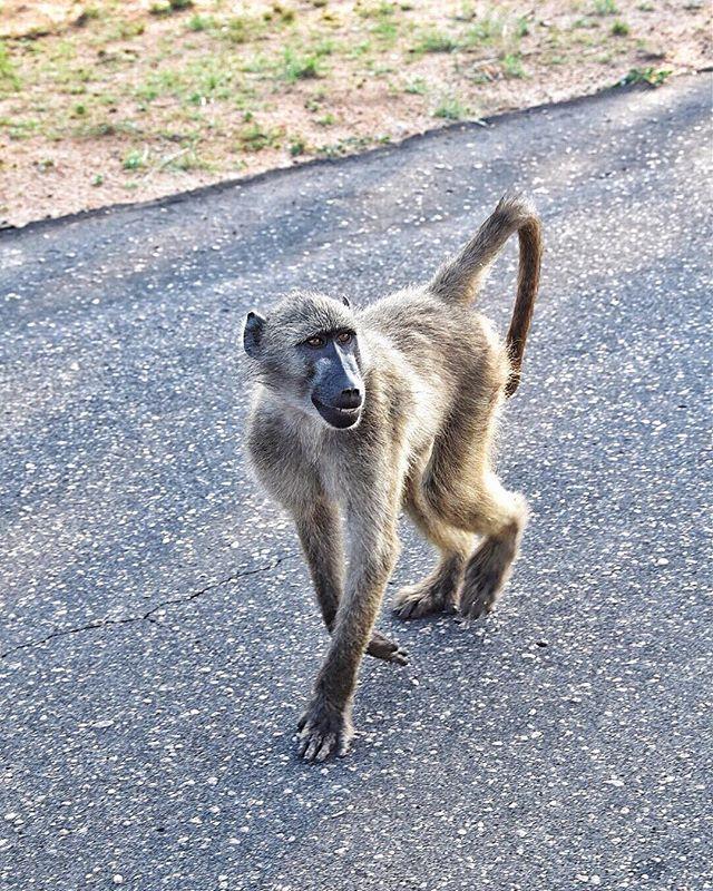 """""""OK guys, wo gehts hier zu den #bananen ???"""" 🍌 🐒 #monkeytime"""