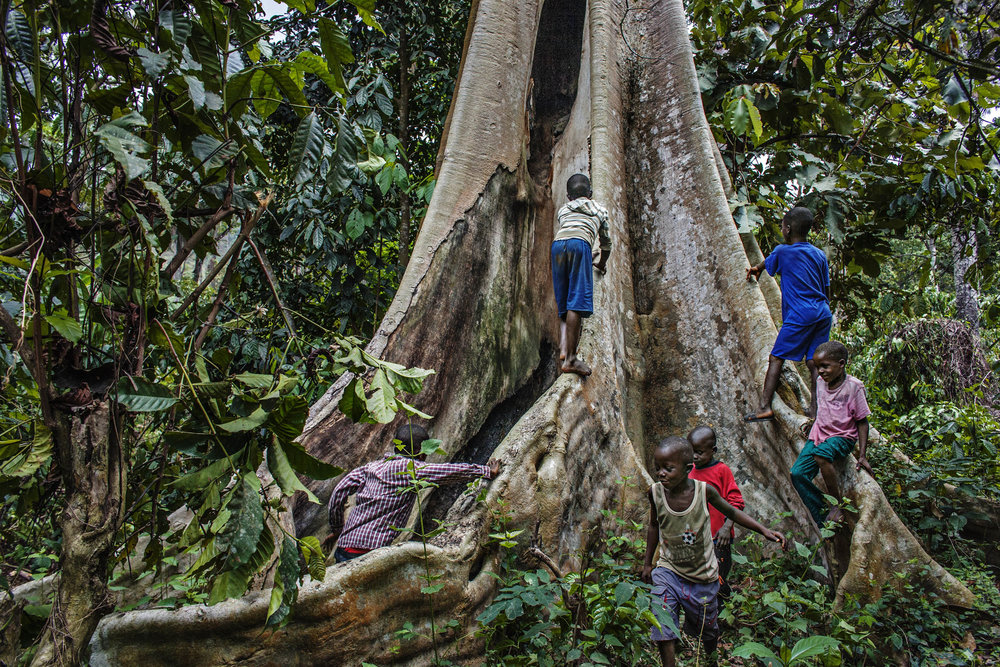 Young boys play around the tree that used to house a large colony of insect bats. Dr. Fabian Leendertz suspects that these bats may have bee the reservoir host for the Ebola virus that broke out in Meliandou in December 2013.  (Pete Muller/Prime for National Geographic)