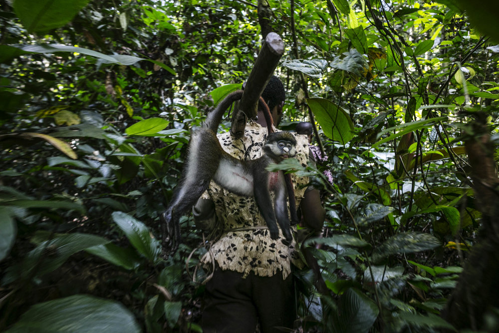 Bushmeat hunters navigate the forest looking for monkeys outside the village of Wisi, northeastern DRC. (Pete Muller/Prime for National Geographic)