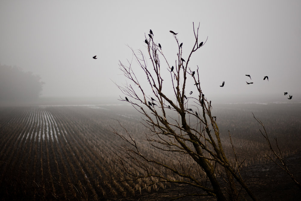 A winter scene in California's Delta, where much of California's scarce water supply passes through.
