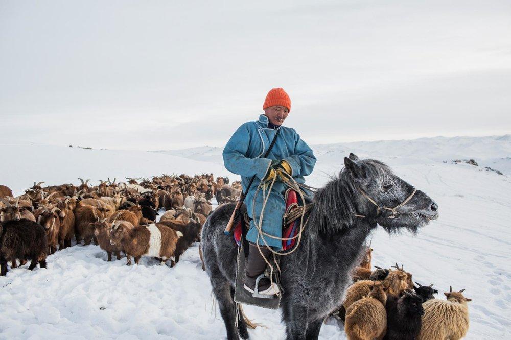 01_Mongolia-Dzud_KO-089.adapt.1900.1.jpg