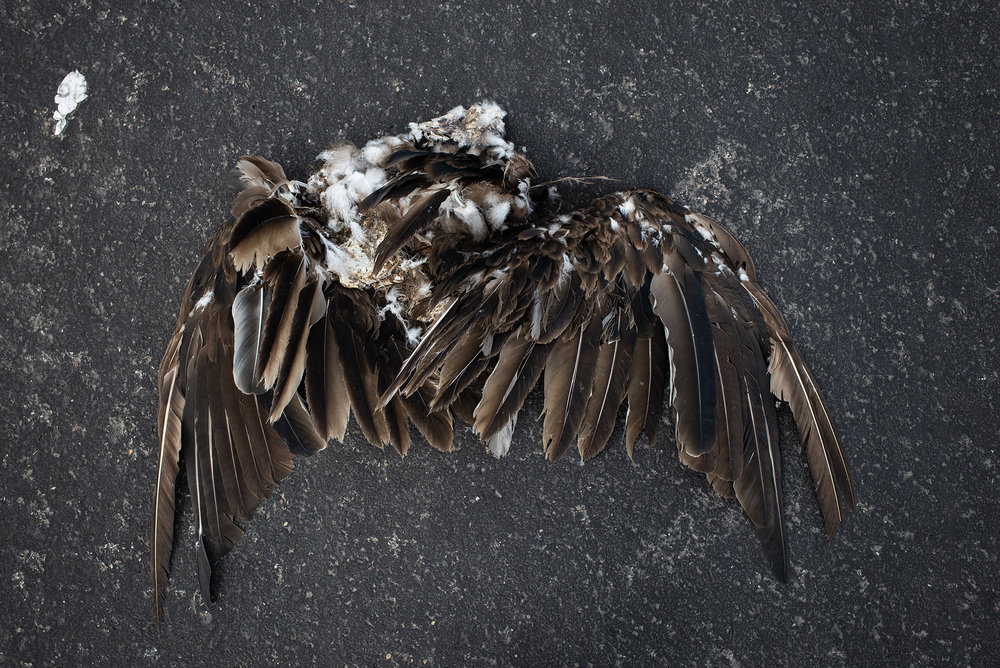 Detail of a dead eagle. The Rio Grande is well known for being a natural border between Mexico and United States, and to which many people submerge to reach the United States illegally, escaping the violence and bad economic situation of their countries. Eagle Pass, Texas, United States. June 21st, 2018. Photographer: Luján Agusti.