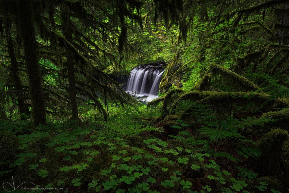 butte.creek_20150515_0095_edit_final_1200 (2).jpg