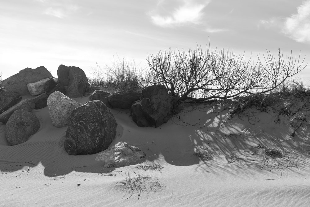 | The Beach |