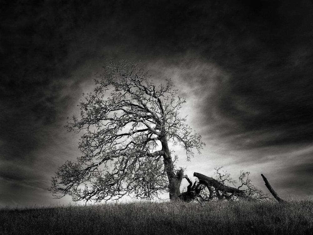 The Hurt Tree