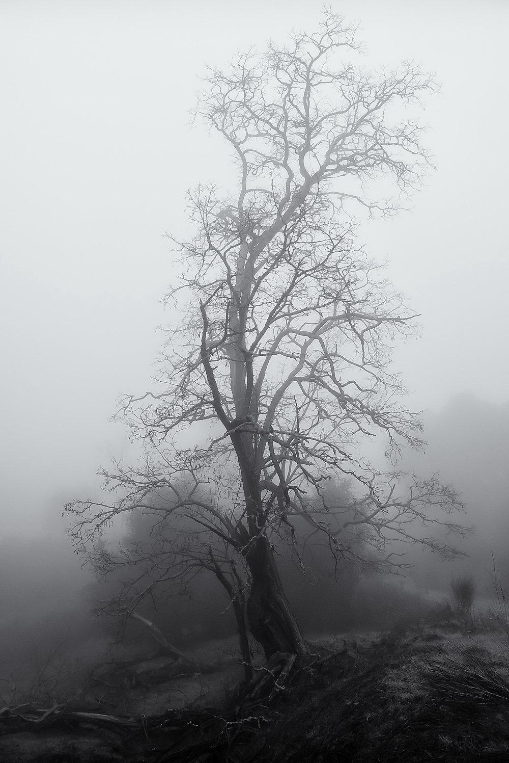 Tree in Winter Fog