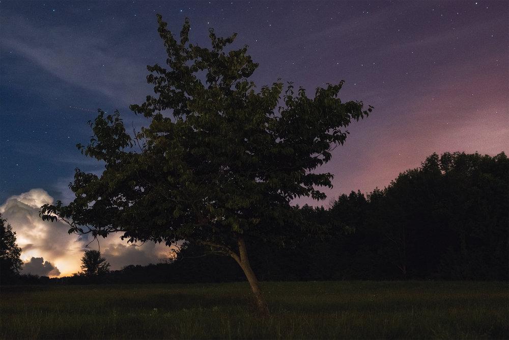 "Cody Schultz - ""The Lightning Tree"" - www.codyschultz.com"
