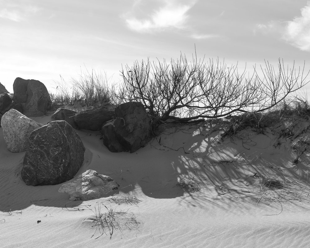 A black and white photograph by fine artist Cody Schultz, this photo is of a serene moment on a beach in New Jersey. The photograph is of a grouping of highly detailed rocks surrounding a small, barren bush. The entire scene is rather calming, without being too much drama or too deep of blacks.