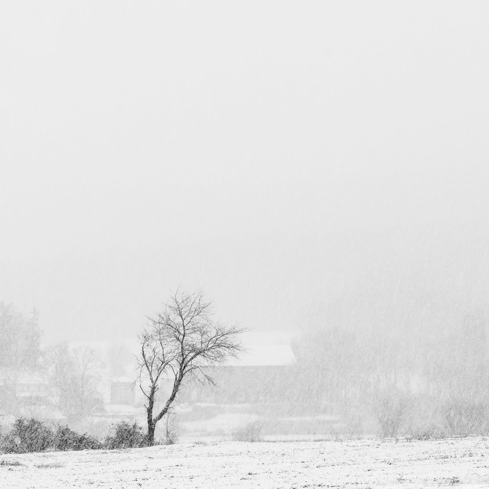 A black and white photograph by fine artist Cody Schultz, In The Farmer's Field is a miminalistic square piece of a lone tree withstanding a snow-storm, standing without company in the field of a local farmer. In the background, almost entirely hidden by the snow, are some of the buildings owned by the farmer, including his barn and home.