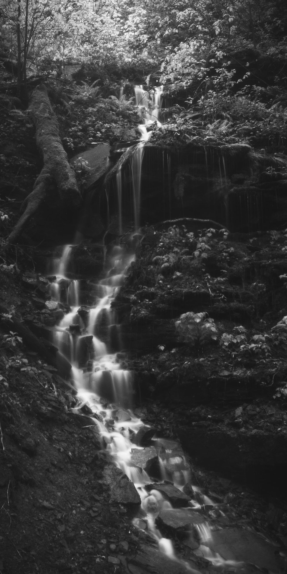 A black and white photograph by fine artist Cody Schultz, Cascade depicts a single, small waterfall as it streams down a slight hill aside a popular trail in Ricketts Glen, Pennsylvania. This scene is rather unique, given that it is not an official waterfall of the park and therefore does not occur except for after heavy rainfall. The bright white waterfall stands out from the rest of the dark scene and is started at the top of the vertical panorama with a large cluster of bright leaves in the upper left corner.