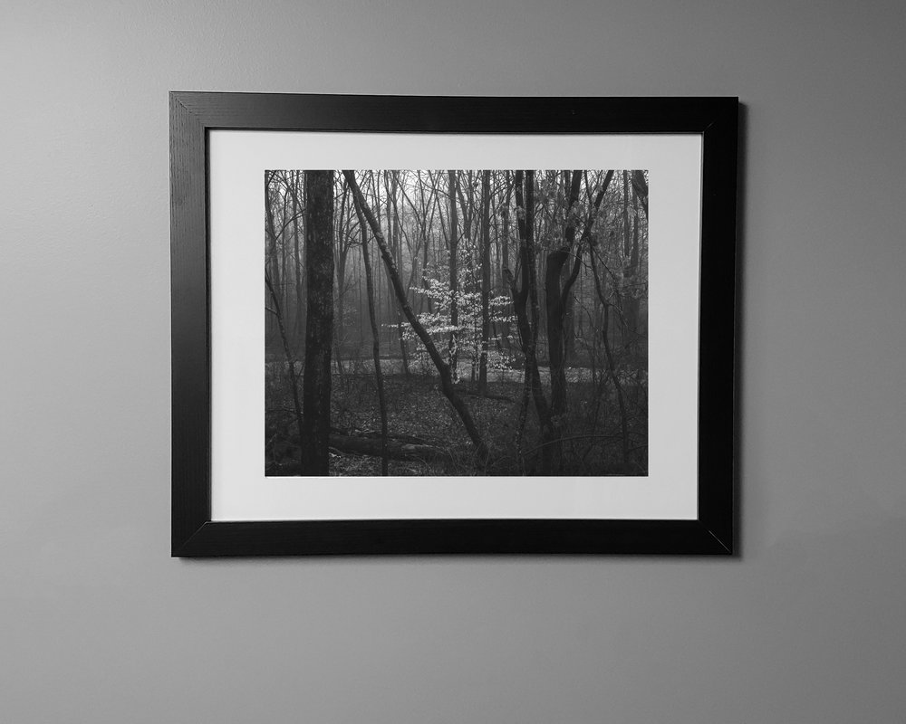 """A black and white snapshot of a 12 x 15"""" framed fine art photograph, titled """"Stand Out,"""" framed in a black frame with a white mat."""