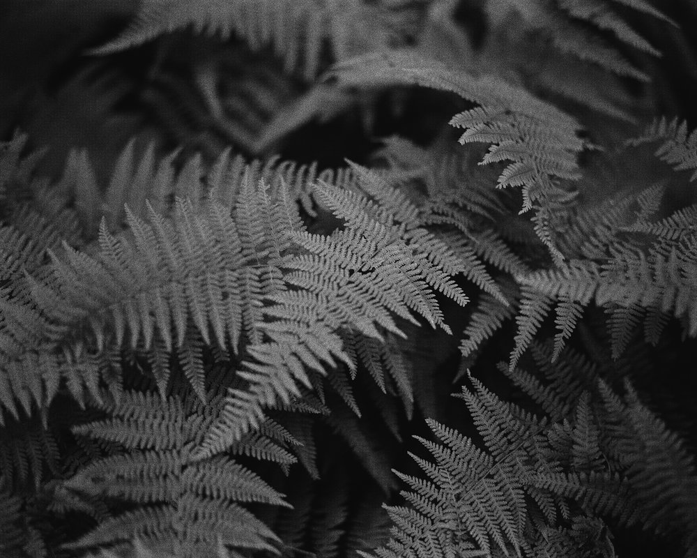 Upon The Forest Floor - Drum Scan.jpg