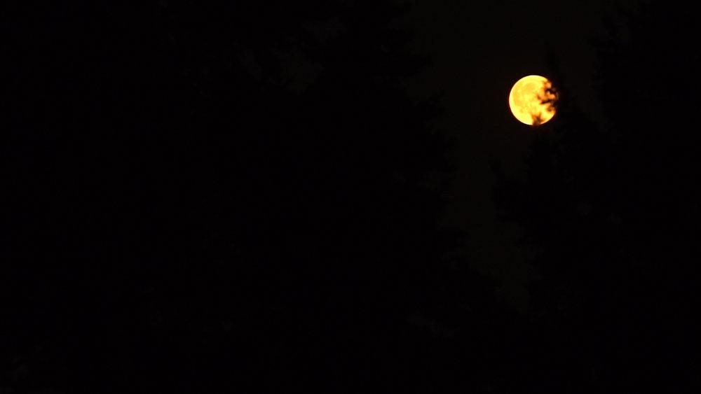 Moon still.jpg