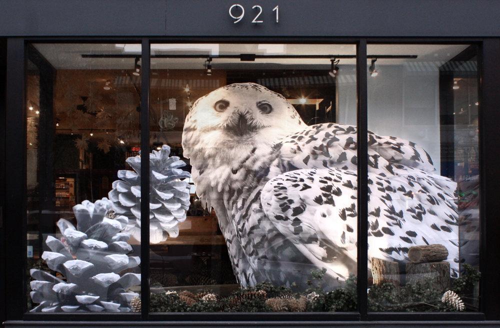 OwlWindow.jpg
