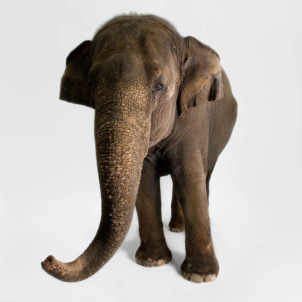 New-Elephant_8.jpg
