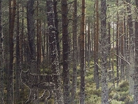 Forest Shadow, 2014.jpg