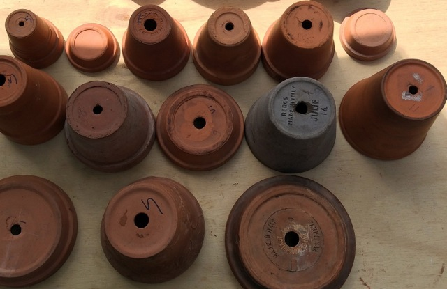 terracotta tree process.jpeg