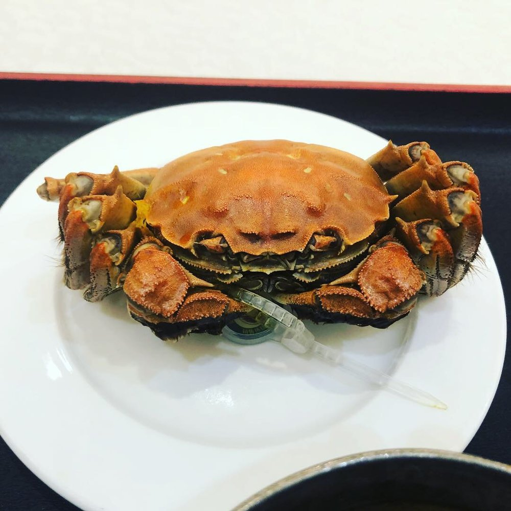 Golden Haired Yangtze River Crab