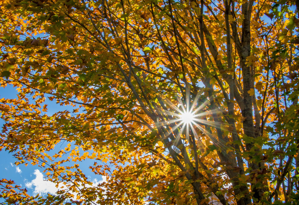 A sunstar through some yellow and green leaves in Weston, MA.  I used the Canon 7D Mark with the Tamron 18-400 lens. ISO 100, f/22, 1/15