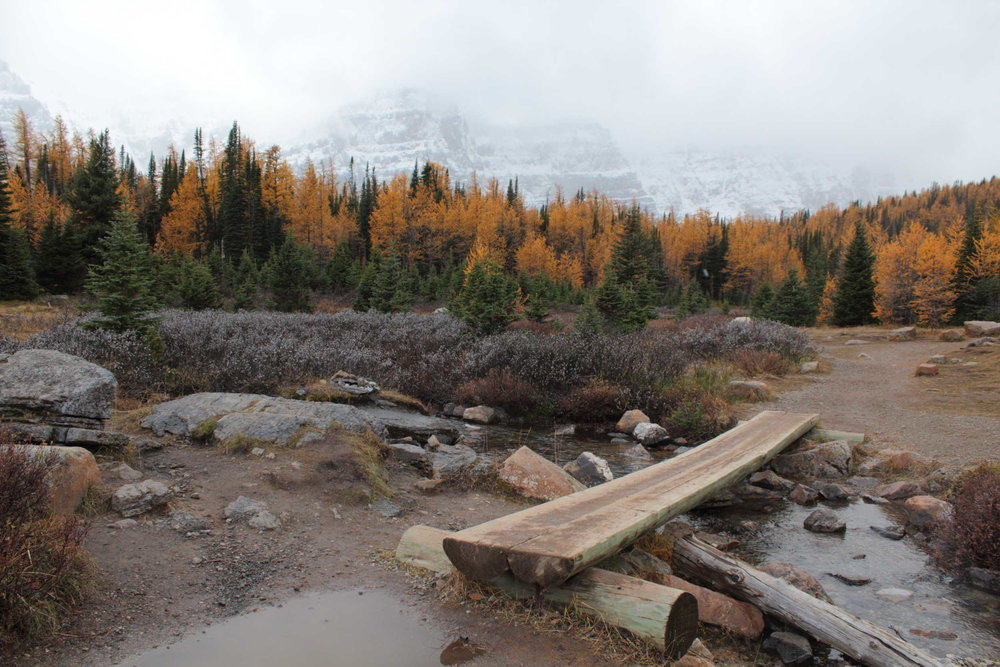 A beautiful creek crossing through Larch Valley