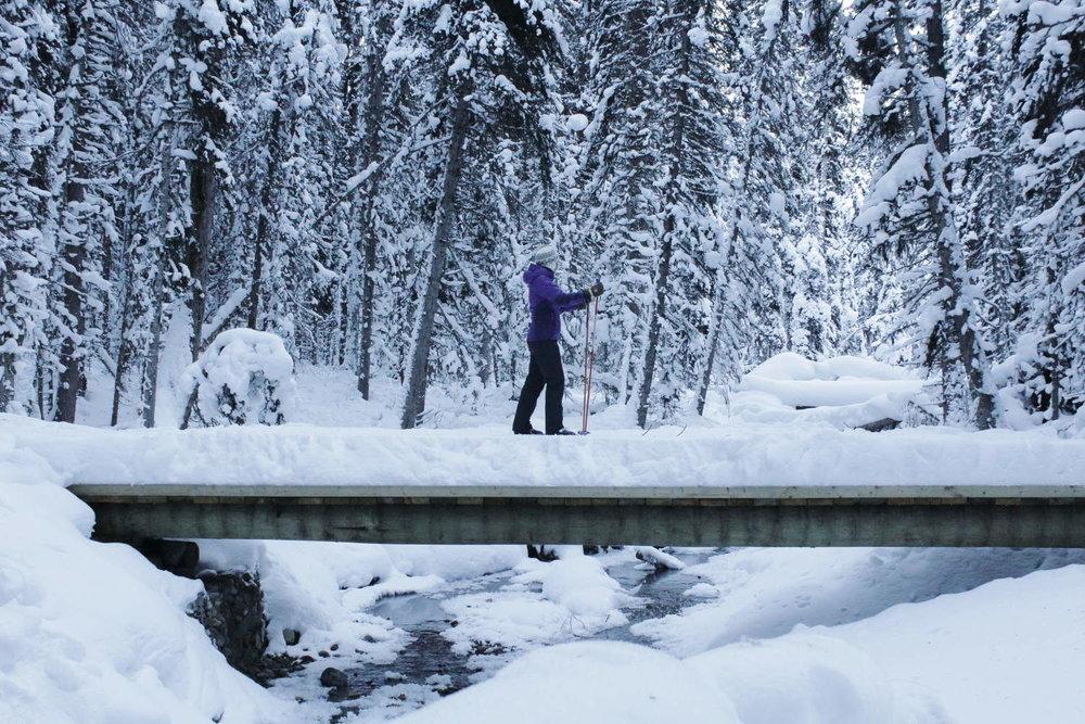 Cross-country skiing over Fox Creek