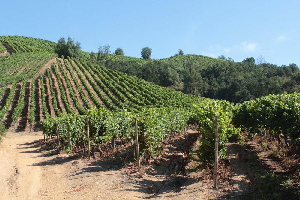Casablanca Vineyard, Chile