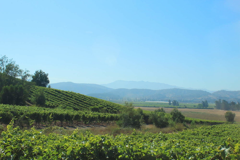 Casablanca Vineyards, Chile