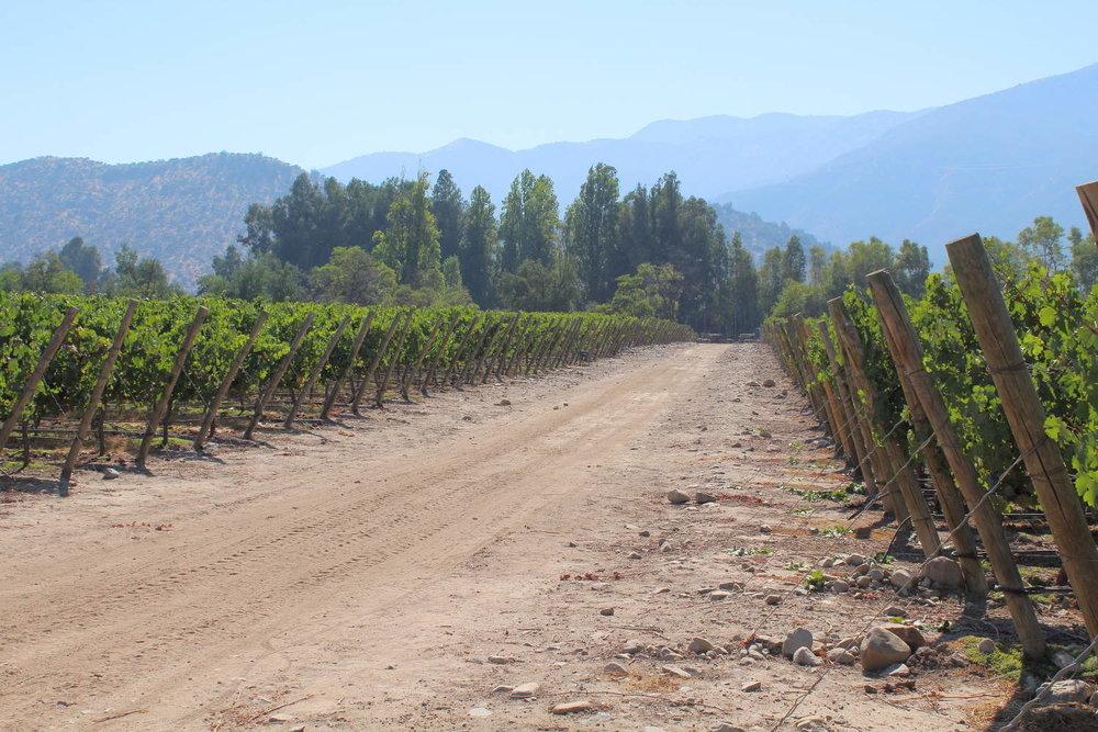 Touring vineyards at Viña Perez Cruz