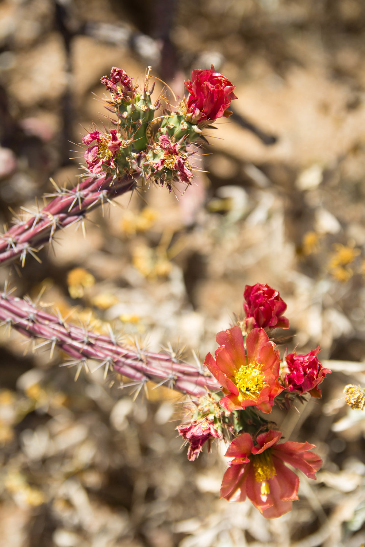 Saguaro NP_edited-3.jpg