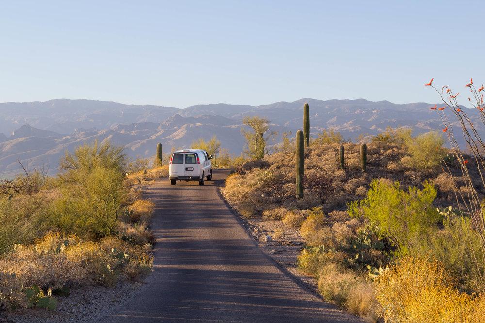 Saguaro NP_edited-11.jpg