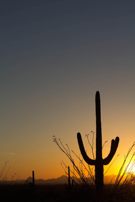 Saguaro NP_edited-19.jpg