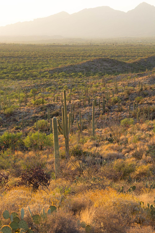 Saguaro NP_edited-18.jpg