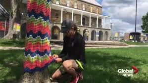 A woman wraps a blanket around one of the Officer's Square elms whose days may be numbered. Photo Credit: Global News