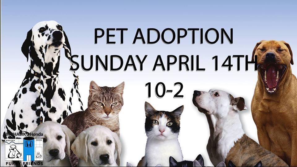 MH Pet Adoption Clinic.jpg