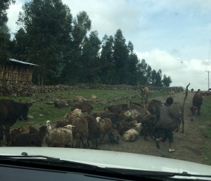 A typical traffic jam in the roads outside of Gondar
