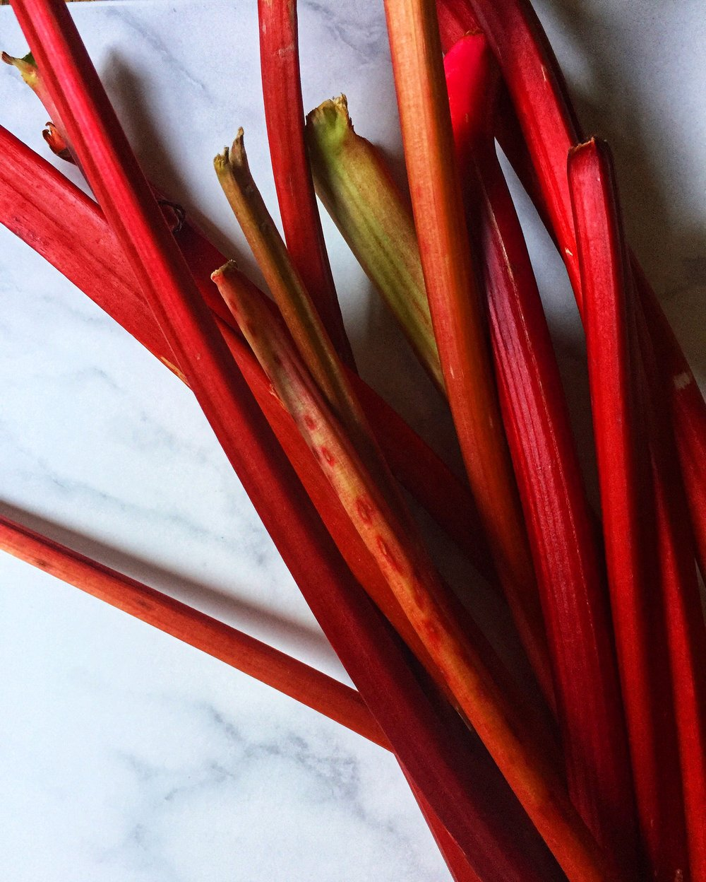 bright pink stalks of rhubarb make for the best shades of rhubarb gin ~