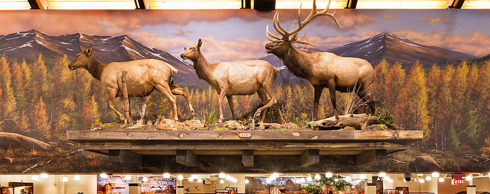 Mural Diorama on Canvas for Corporate Sporting Goods Chain