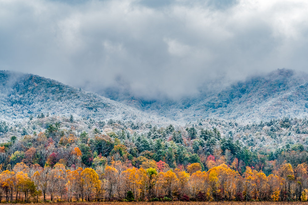 Fall Snow Fall