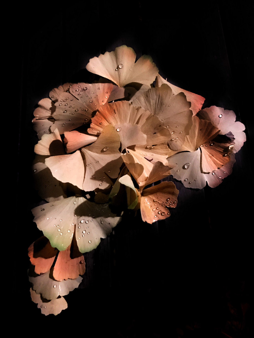 Ginko Leaf Sculpture
