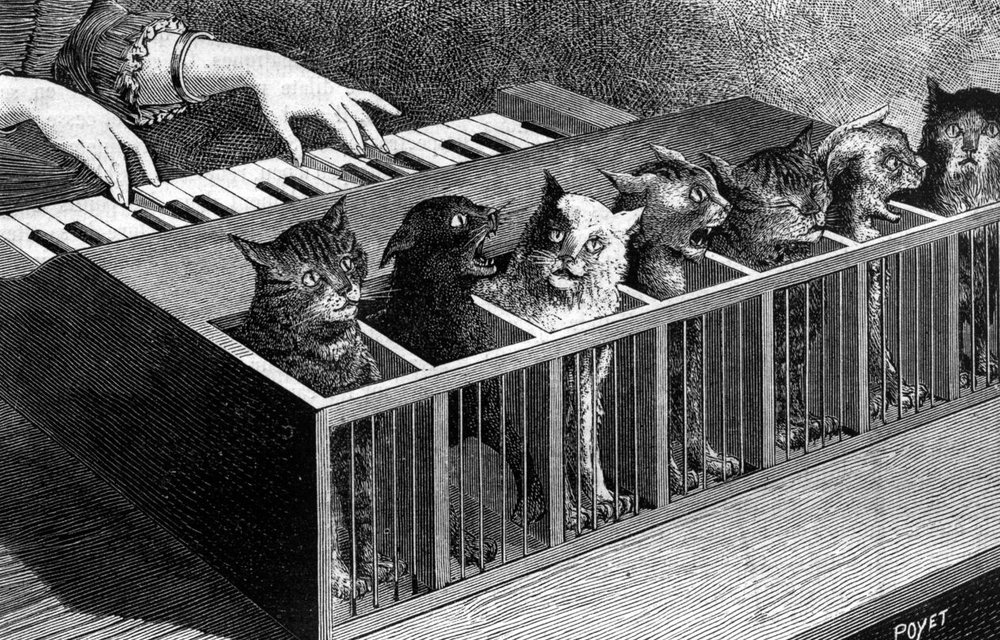 cat-piano.jpg